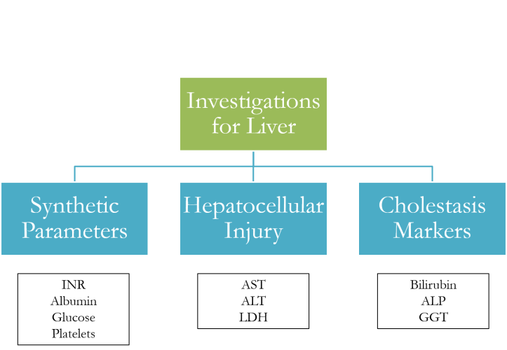 Approach to Liver Abnormalities