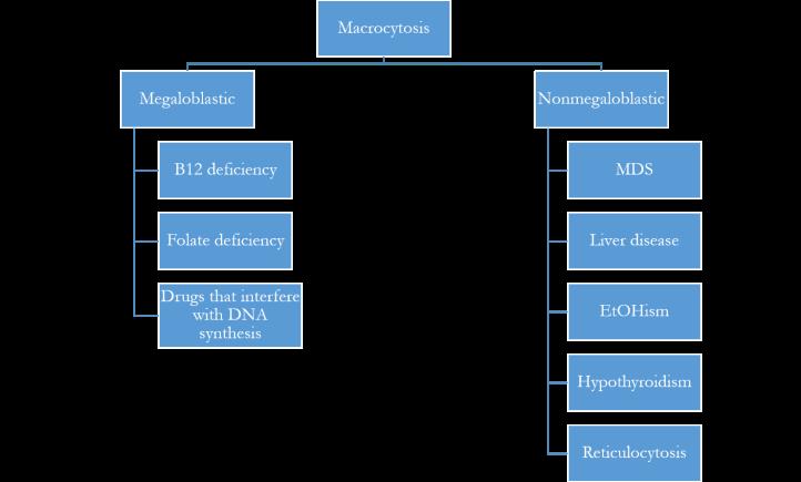Macrocytosis