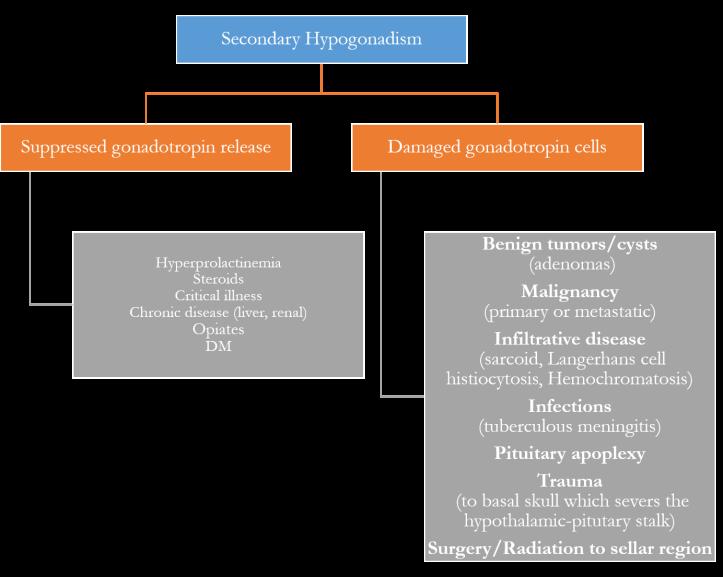 Causes Secondary Hypogonadism.png