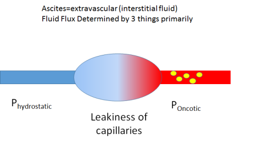 determinants of fluid flux.png